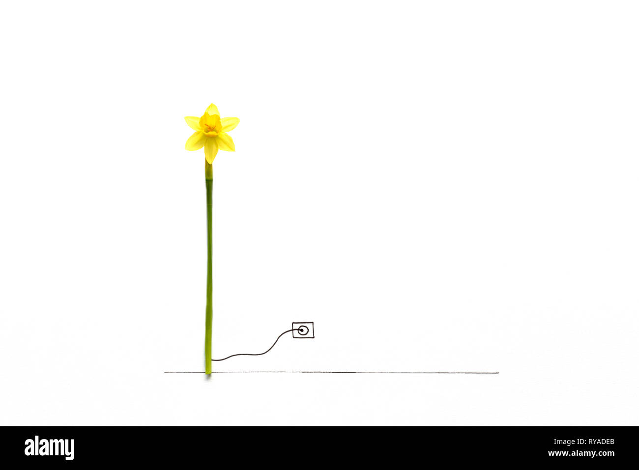 Narcissus flower associated with wind generator turbine attached to drawn electric outlet. Natural energy or creative eco concept. Copy space - Stock Image