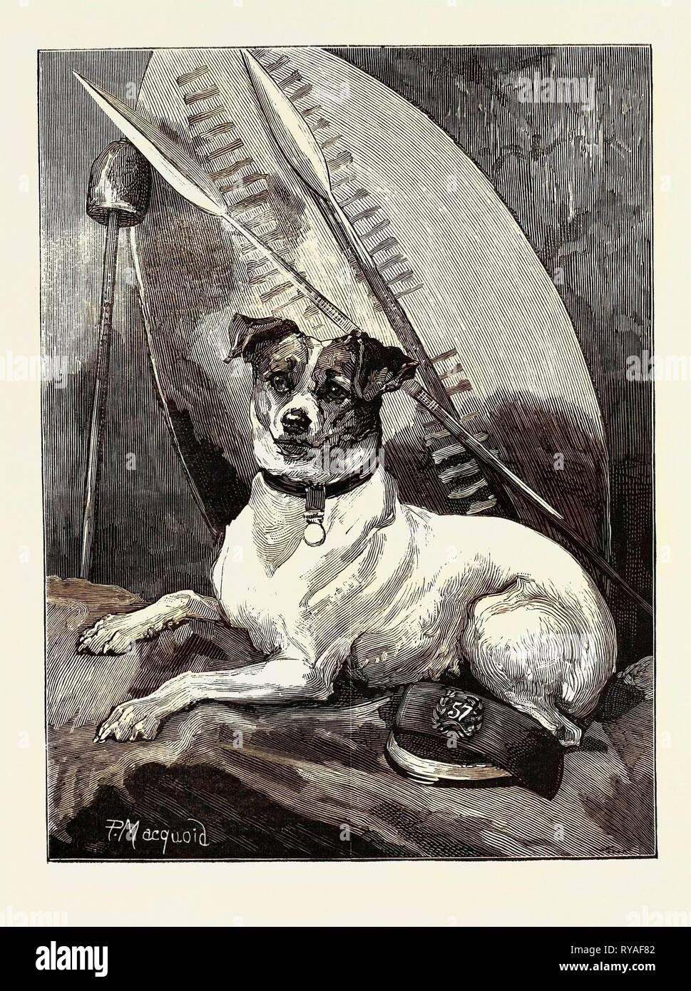 Tottie, a Regimental Pet - Stock Image