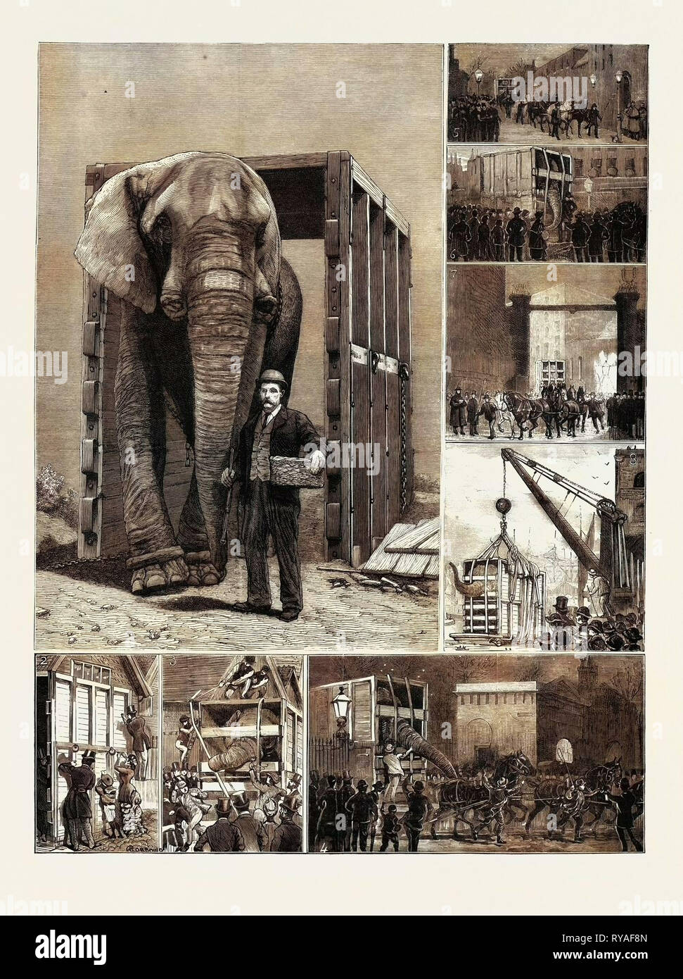 The Removal of Jumbo, on the Way to the Docks: 1. Through His Box at Last, 2. Visitors Inscribing Names on the Box As Having Called, 3. Jumbo Objects to the Irons, 4. At the Park Gates: Jumbo Drives Himself, 5. Albany Street: 'Guard Turn Out', 6. En Route, 'Jumbo's Old Lady', 7. Entering St. Katherine's Dock, 8. In Mid-Air: Being Lowered Into the Barge - Stock Image