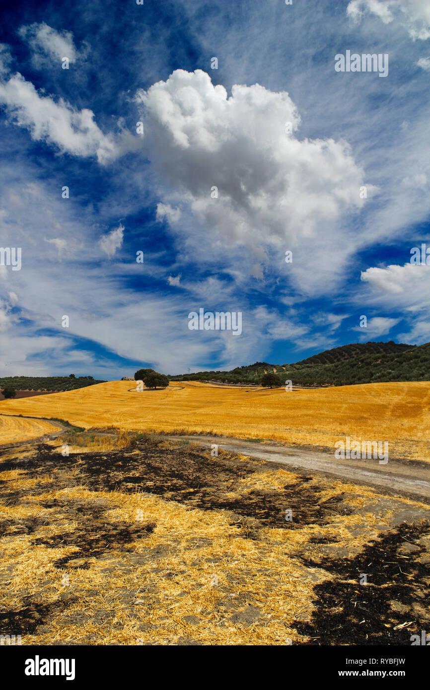 Burned fields - Stock Image