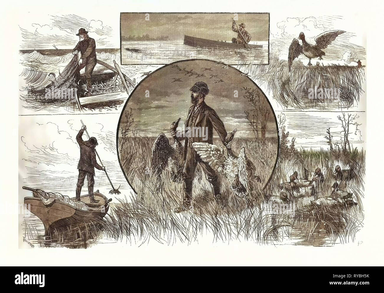 Cruelties Practised on Fish and Fowl, US, USA, America, United States, American, Engraving 1880 - Stock Image
