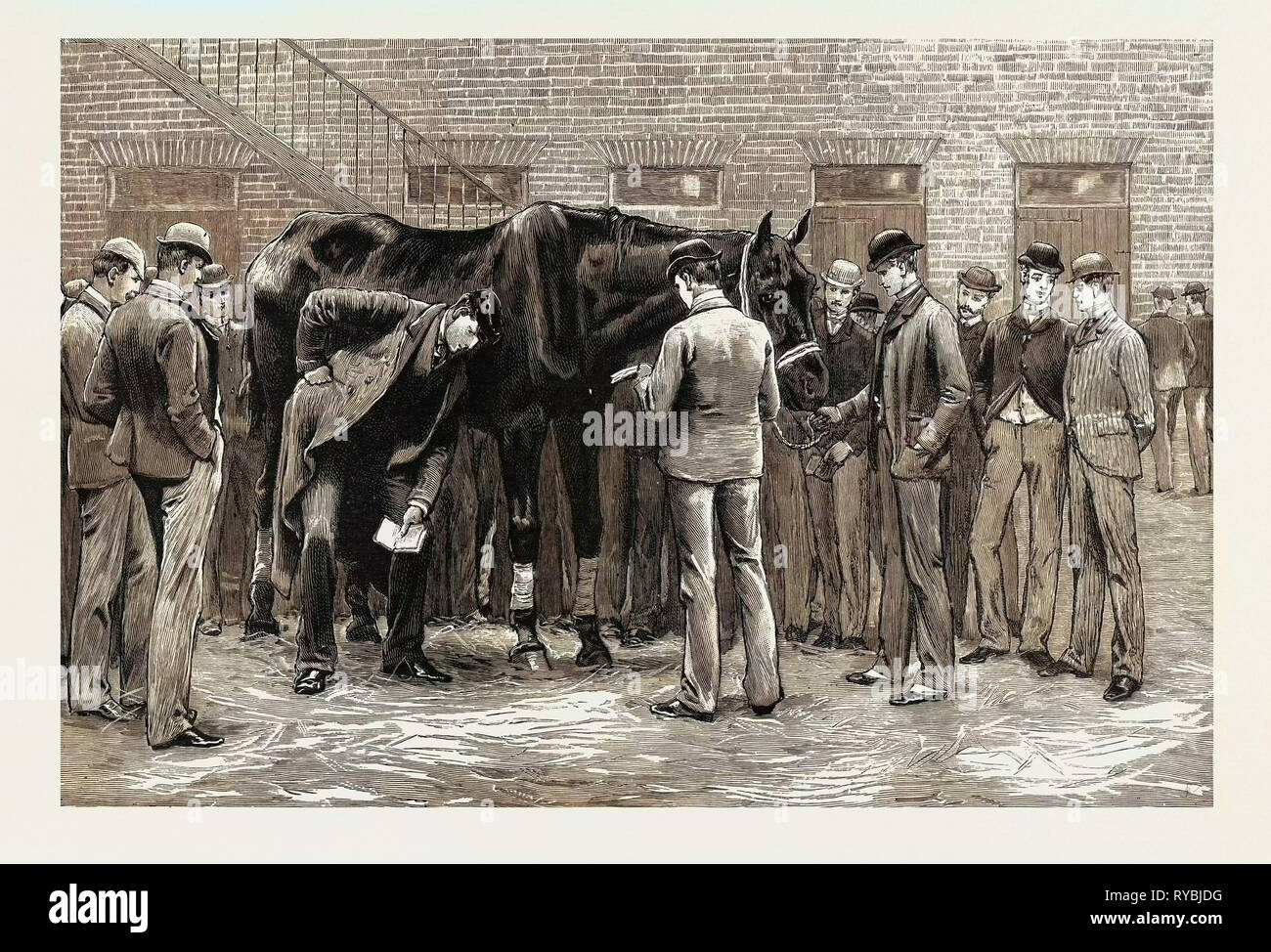 The Centenary of the Royal Veterinary College, Camden Town: Students at Work Under the Direction of S Professor. Free-Practice, Sounding His Lungs - Stock Image