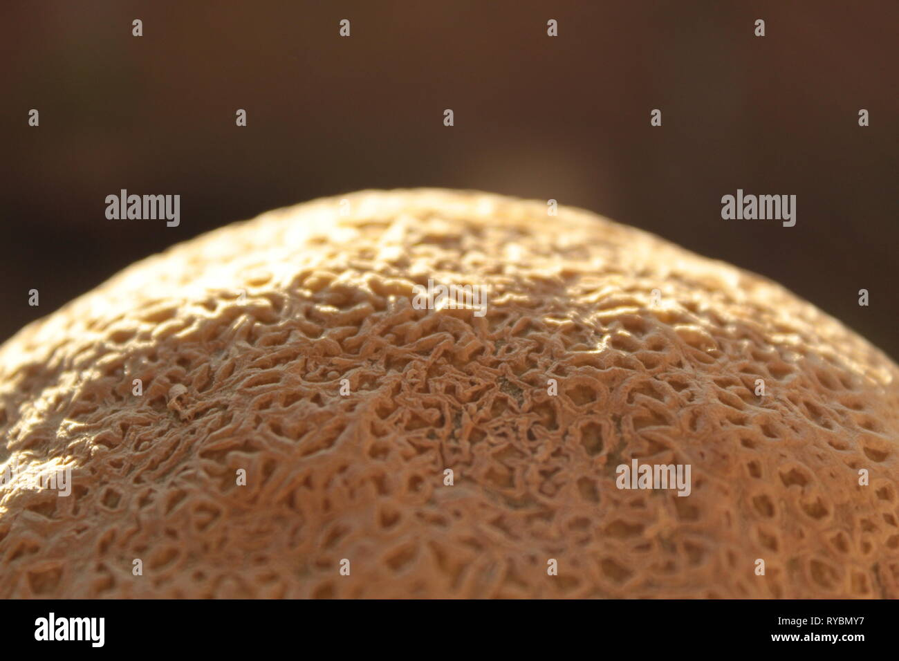 Textura de un melón, foto tomada en mi jardín en Tonala, Jalisco, México utilizando un lente 18-55 mm canon y haciendo un zoom a la cascara - Stock Image