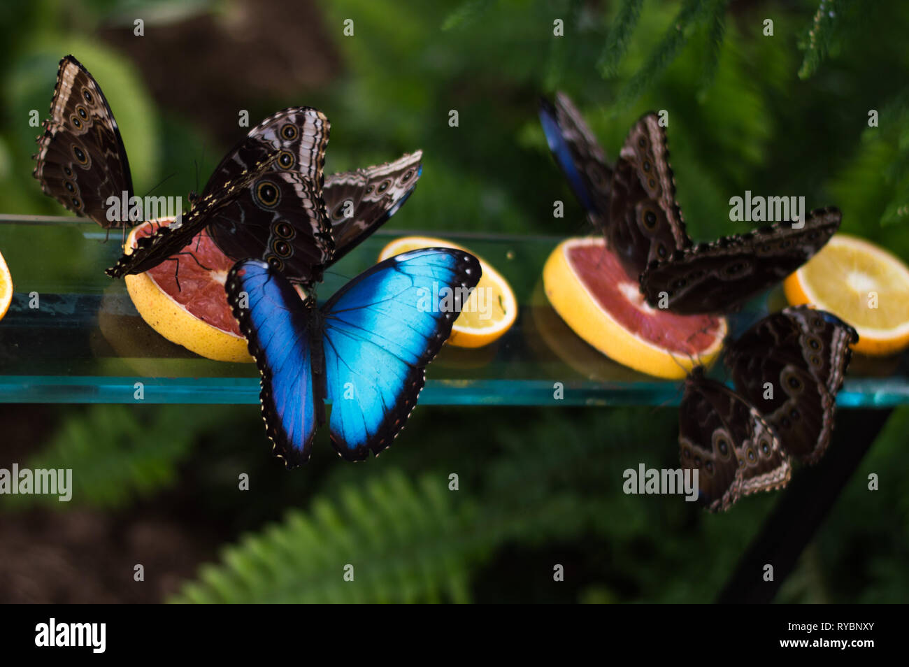 Dinner time for butterflies - Stock Image