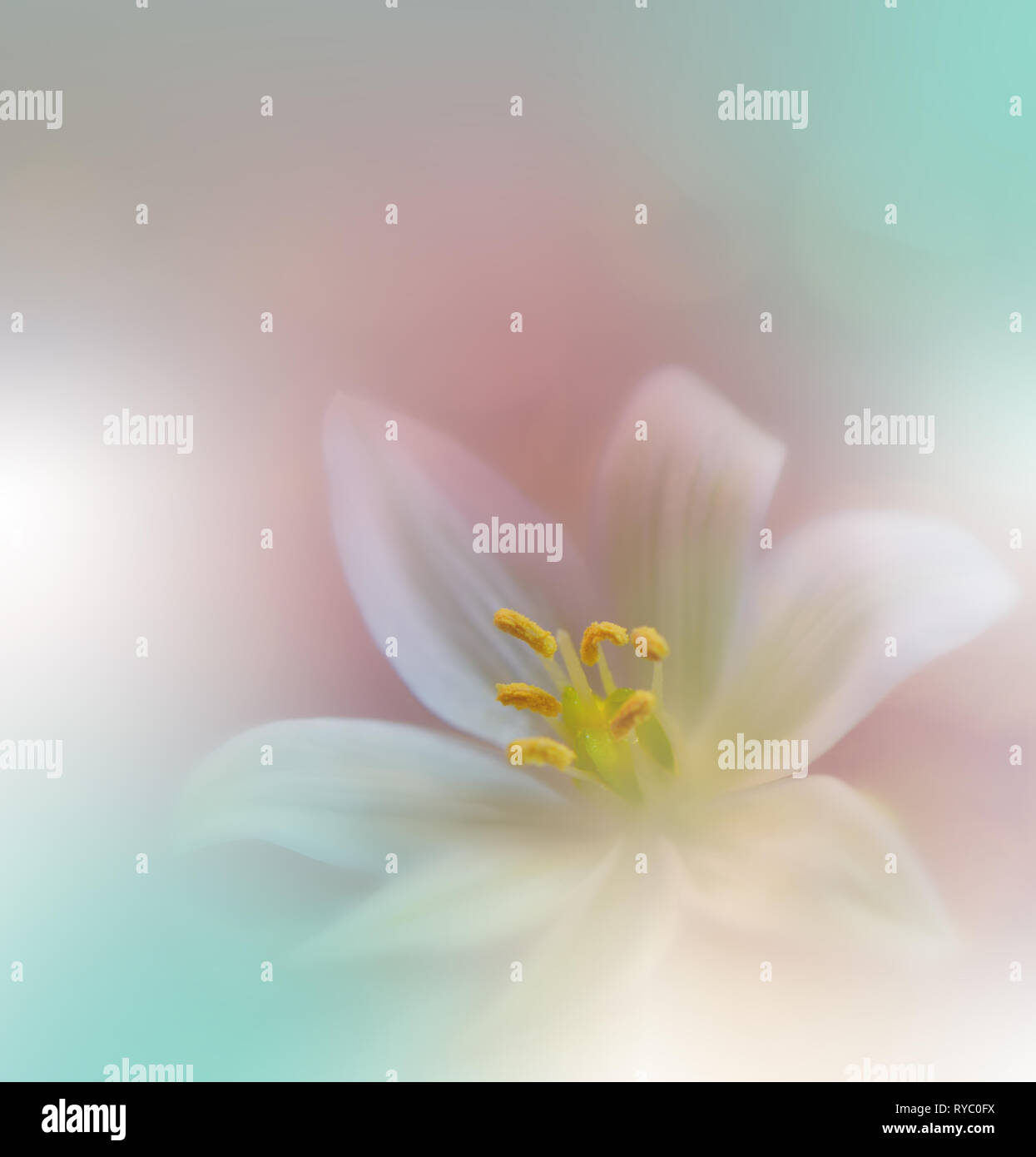 Beautiful Nature Background Colorful Artistic Wallpaper Natural Macro Photography Beauty In Nature Creative Floral Art Tranquil Scene Abstract Flowers Stock Photo Alamy