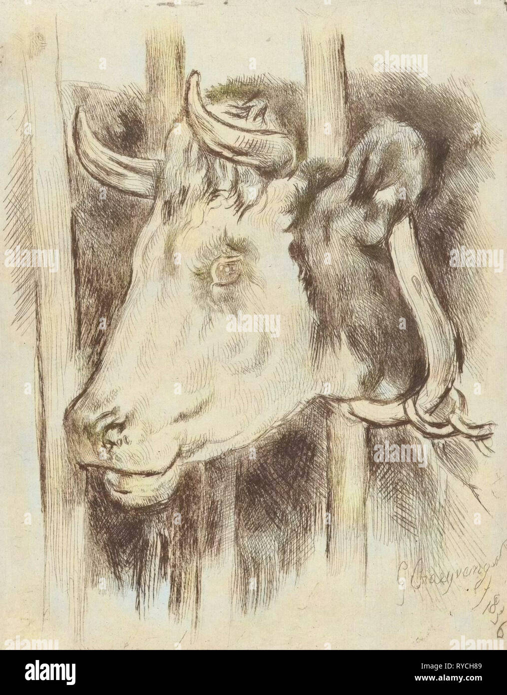 Head of a cow, print maker: Gijsbertus Craeyvanger, 1836 Stock Photo