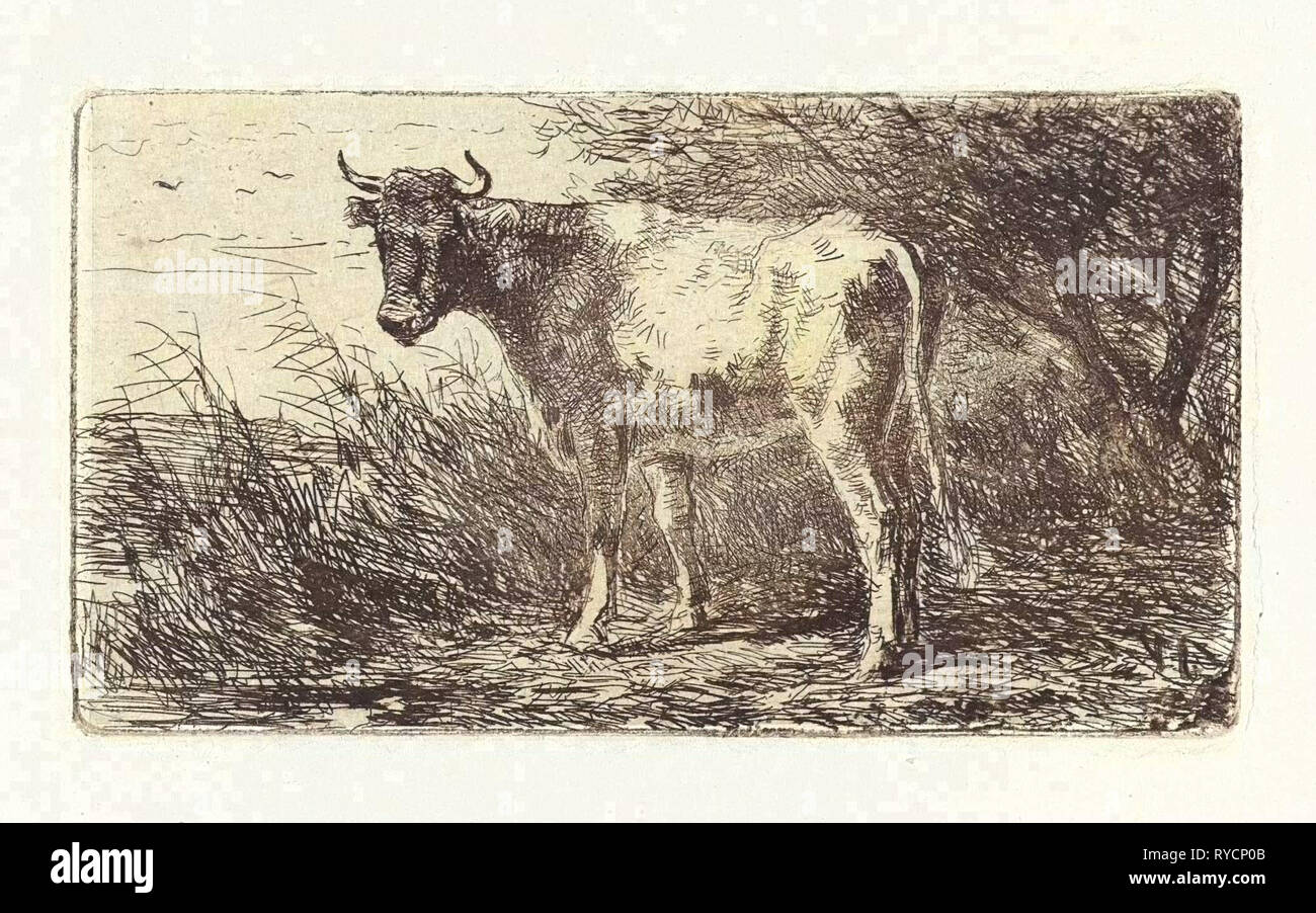 Cow on the bank of a river, Jan Vrolijk, 1860-1894 - Stock Image