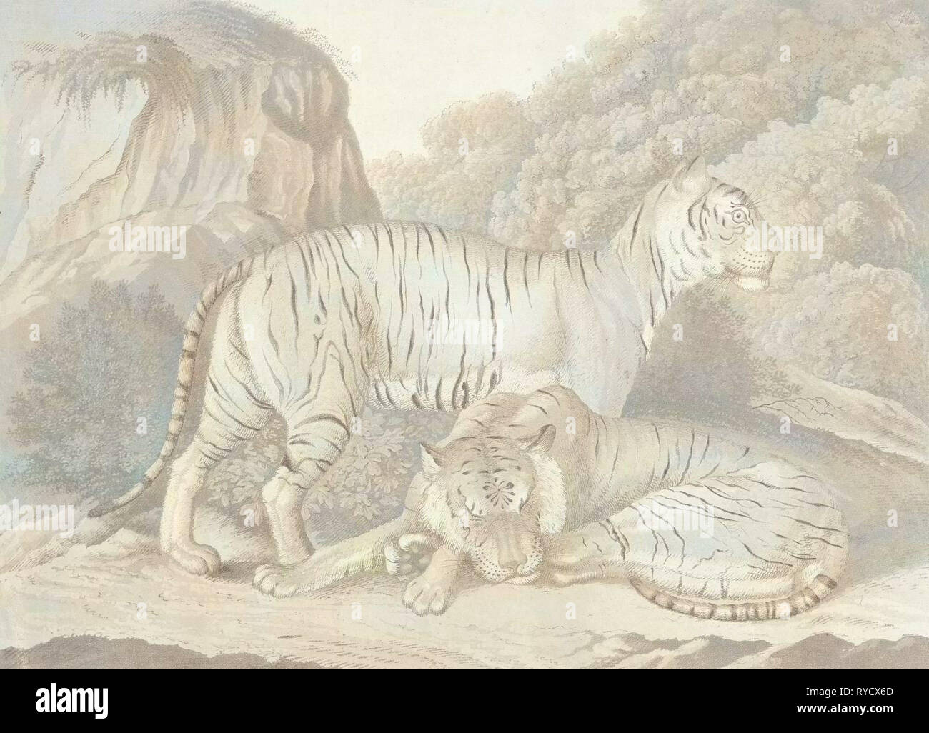 Two tigers in a landscape, Isaac van Haastert, c. 1768 - 1834 - Stock Image