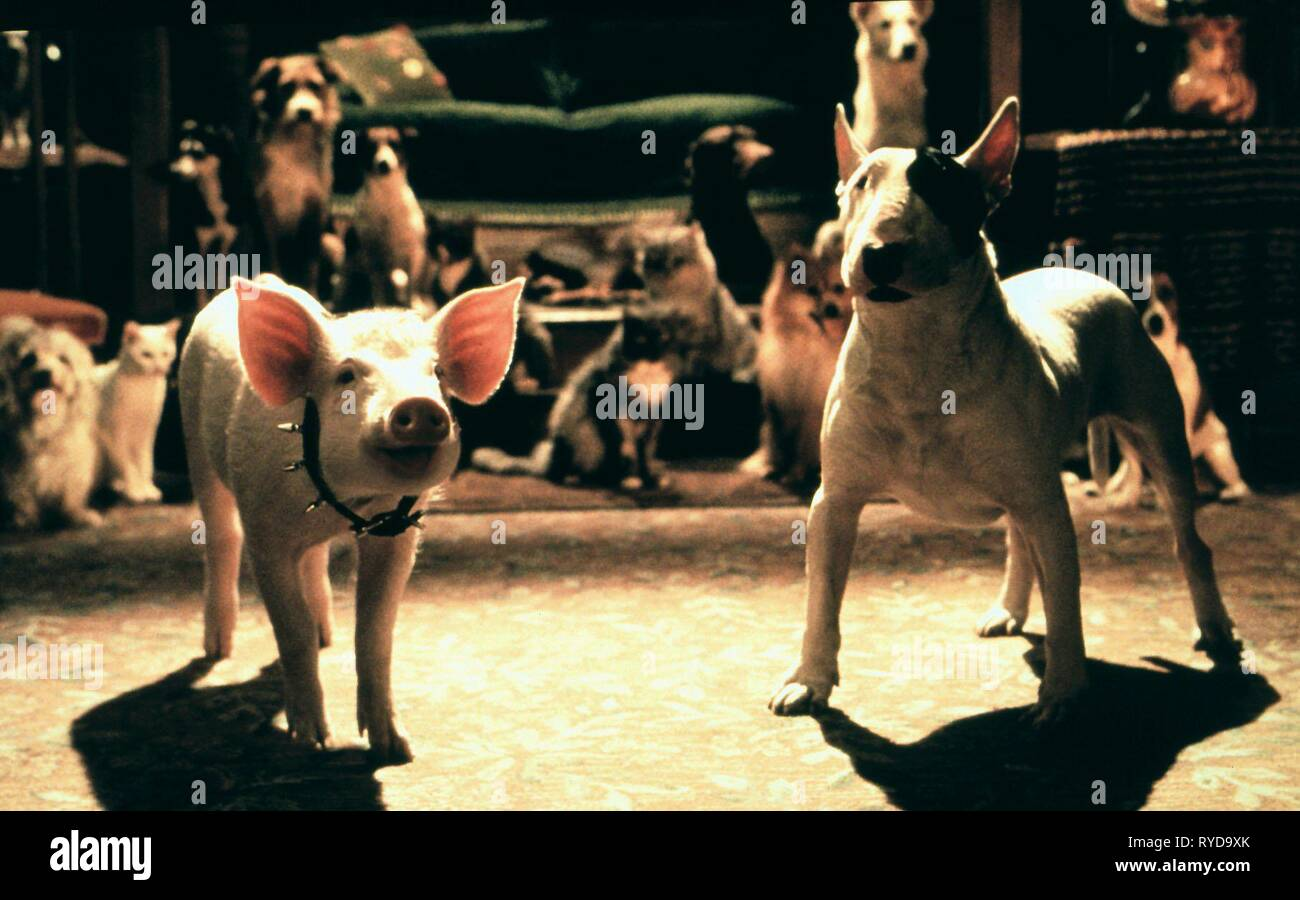 BABE THE PIG, PB THE PITBULL, BABE: PIG IN THE CITY, 1998 - Stock Image