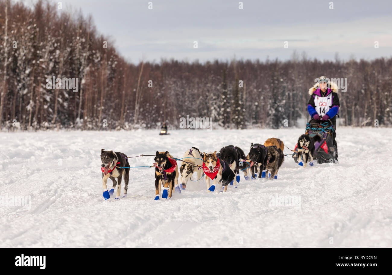 Musher Jessie Royer after the restart in Willow of the 47th Iditarod Trail Sled Dog Race in Southcentral Alaska. - Stock Image