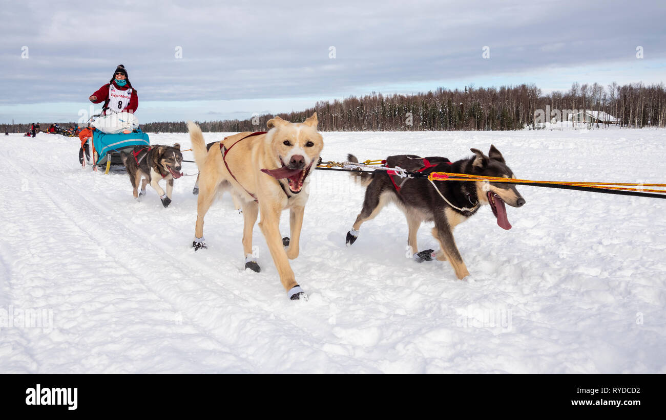 Musher Kristin Bacon after the restart in Willow of the 47th Iditarod Trail Sled Dog Race in Southcentral Alaska. - Stock Image