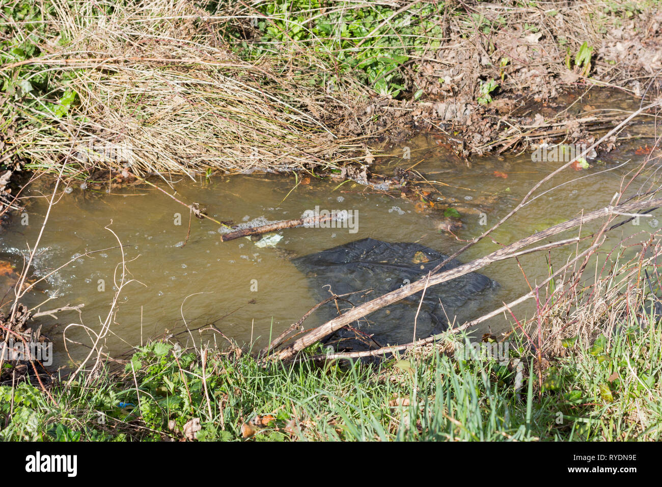 Plastic rubbish polluting a stream in an urban area,  Dorset, UK - Stock Image