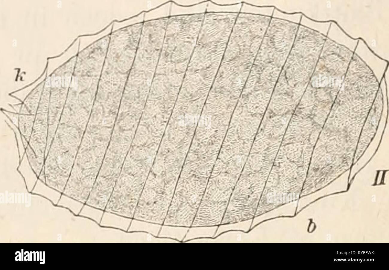 Dr. L. Rabenhorst's Kryptogamen-Flora von Deutschland, Oesterreich und der Schweiz  drlrabenhorstskr05rabe Year: 1900 Stock Photo
