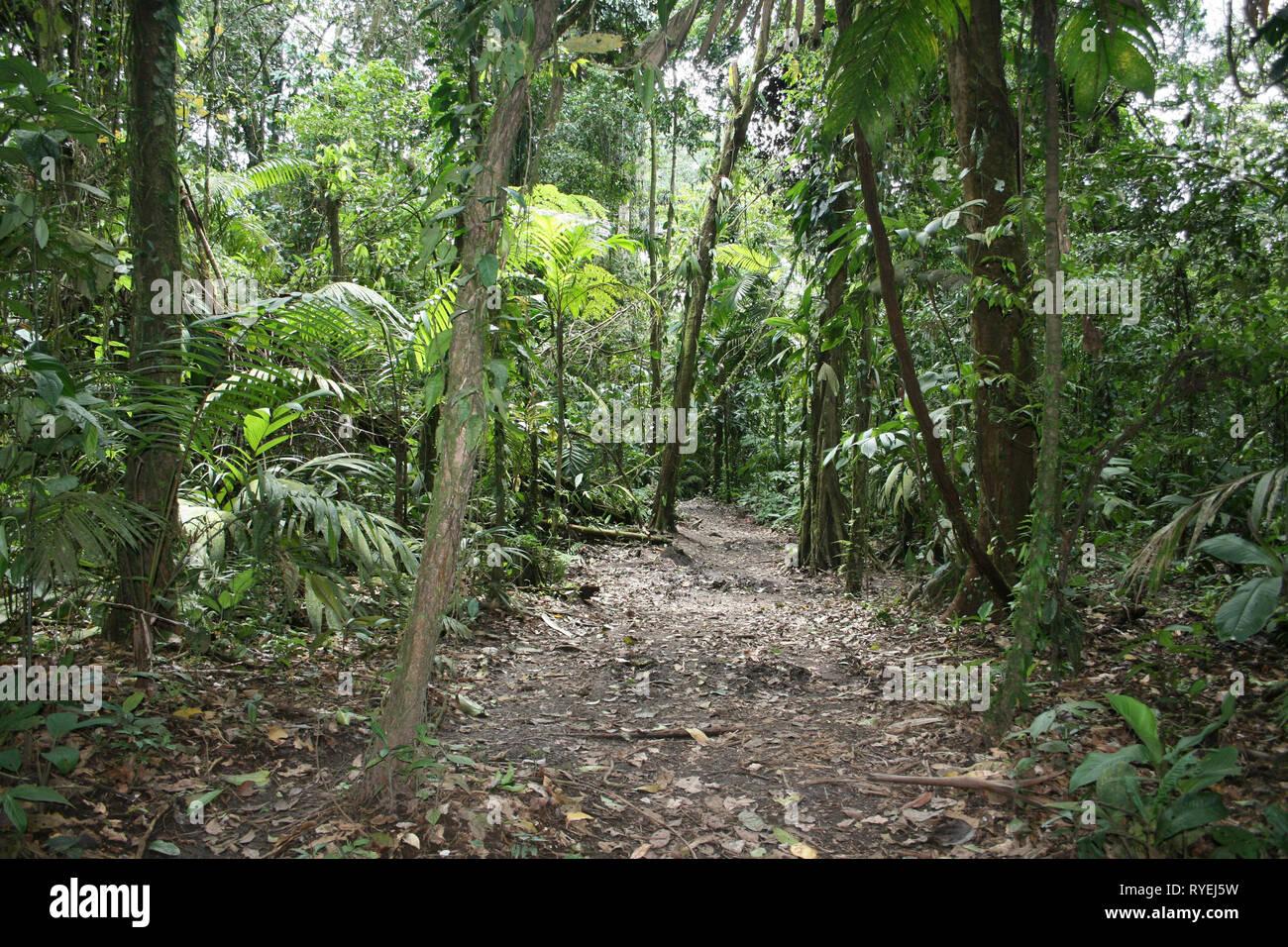 Costa Rica Rainforest in Arenal National Park, La Fortuna, Alajuela Province, Costa Rica - Stock Image