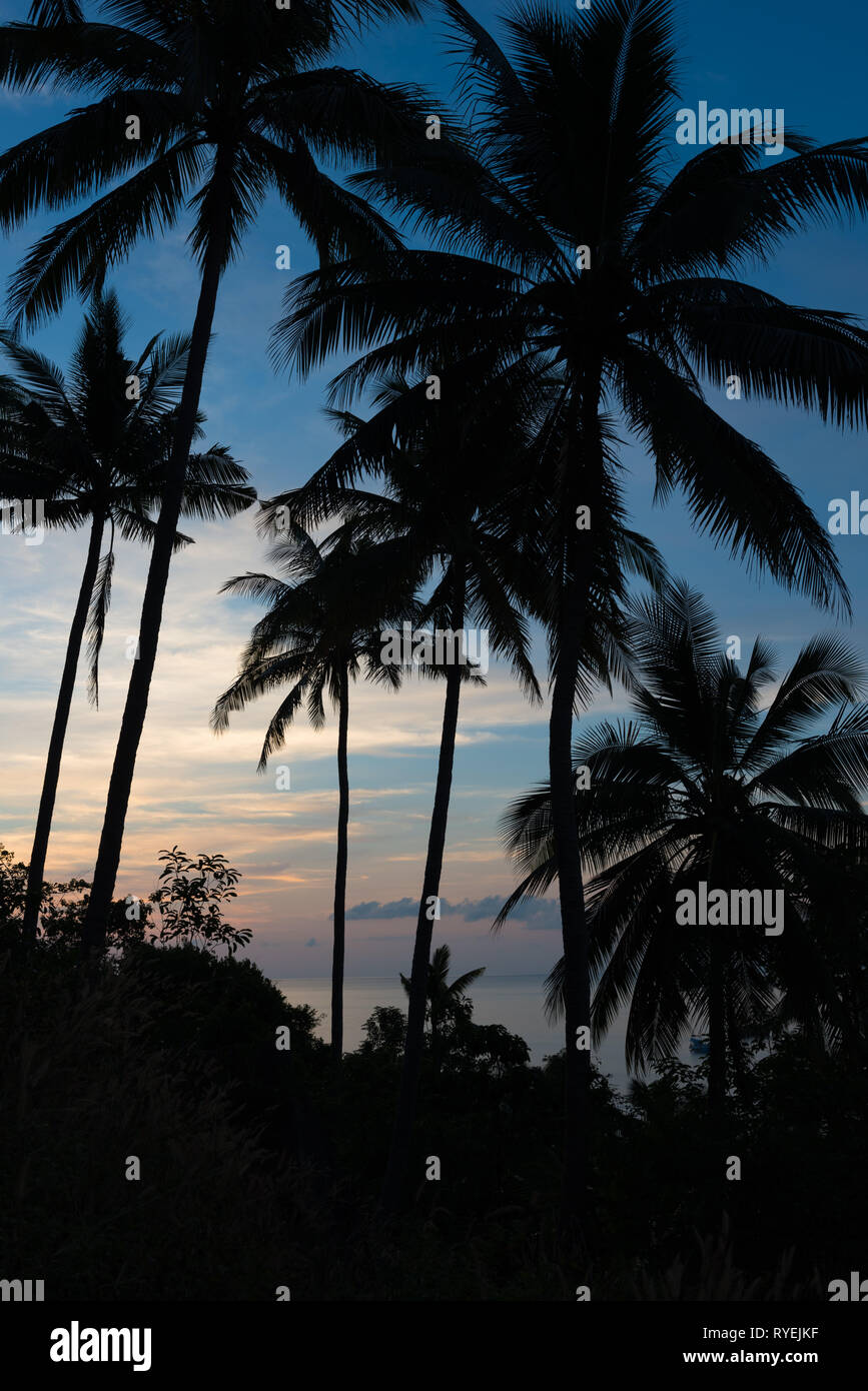 Silhouette of tropical landscape - palm trees on sunset skies and sea Stock Photo