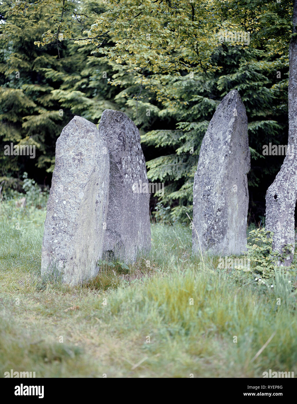 prehistory, megalith / dolmen, prehistorical Bauta stones near Hjortbakke, Bornholm, Additional-Rights-Clearance-Info-Not-Available - Stock Image