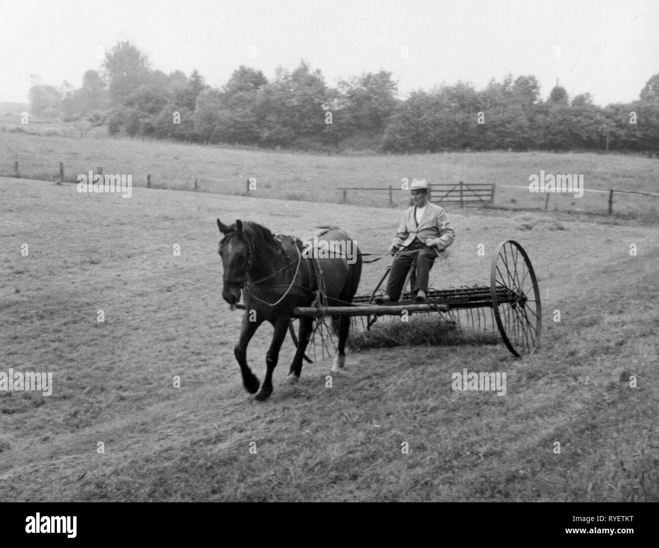 agriculture, rake, horse-driven rake, 1950s, Additional-Rights-Clearance-Info-Not-Available - Stock Image