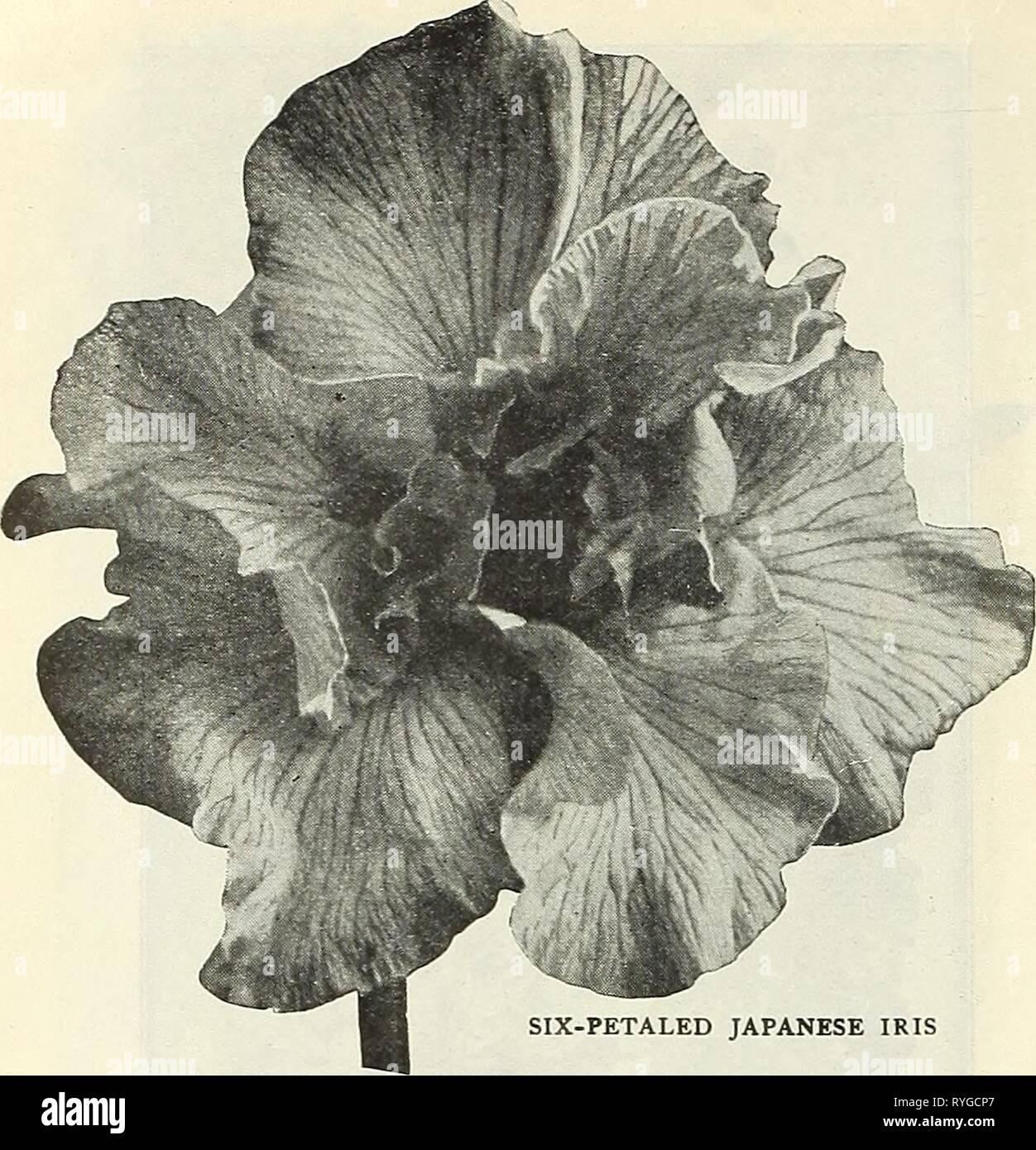 Dreer's wholesale price list : flower seeds for florists