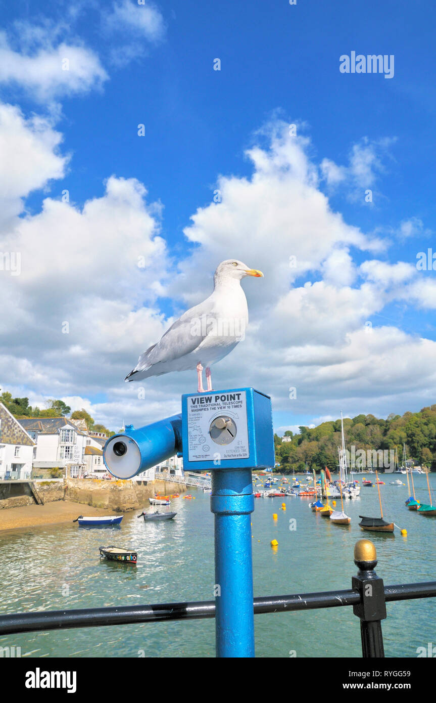 Seagull perched on a traditional coin operated View Point telescope, Town Quay, Fowey, Cornwall, England, UK - Stock Image