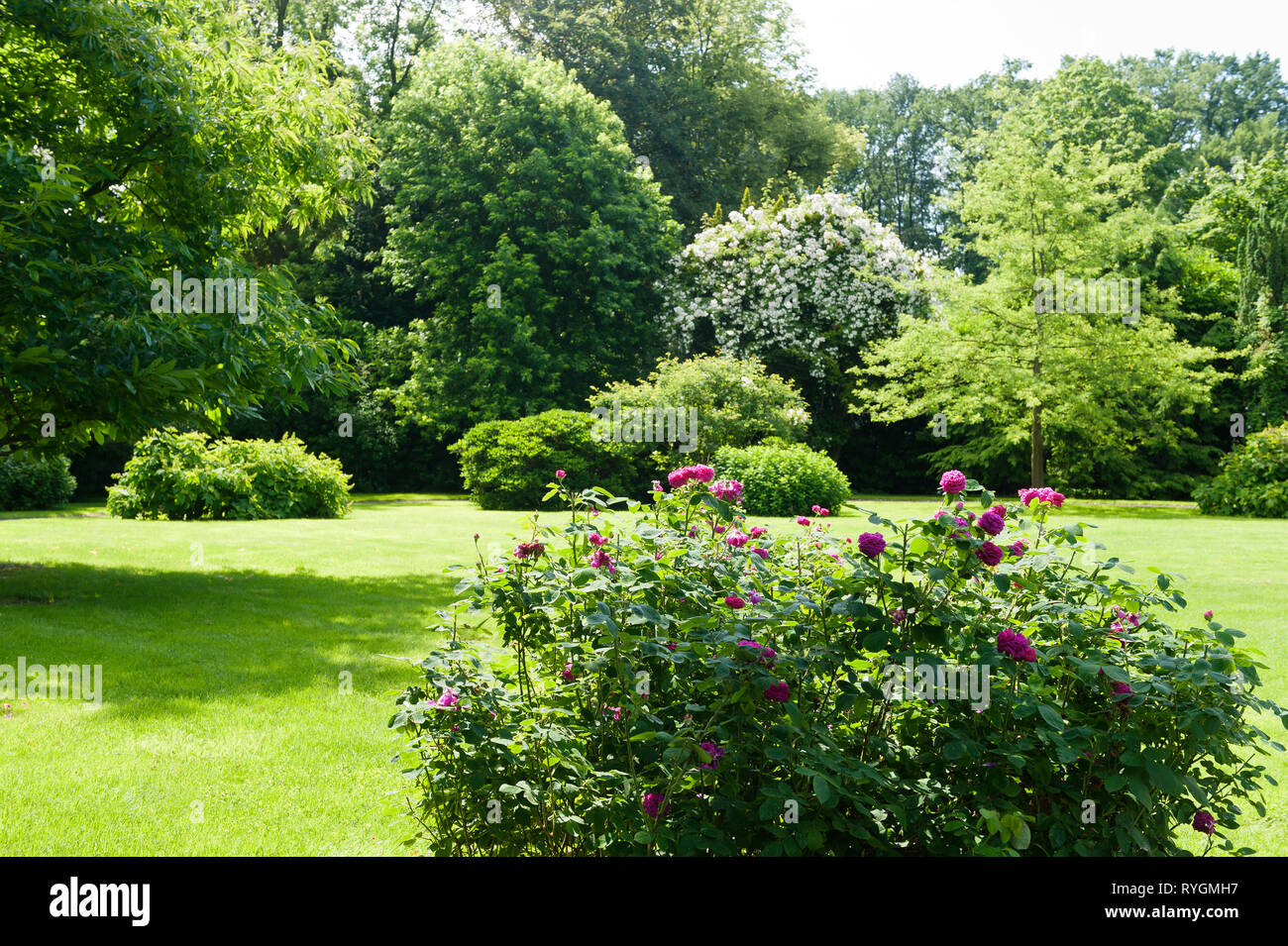 Flowers on lawn by trees - Stock Image