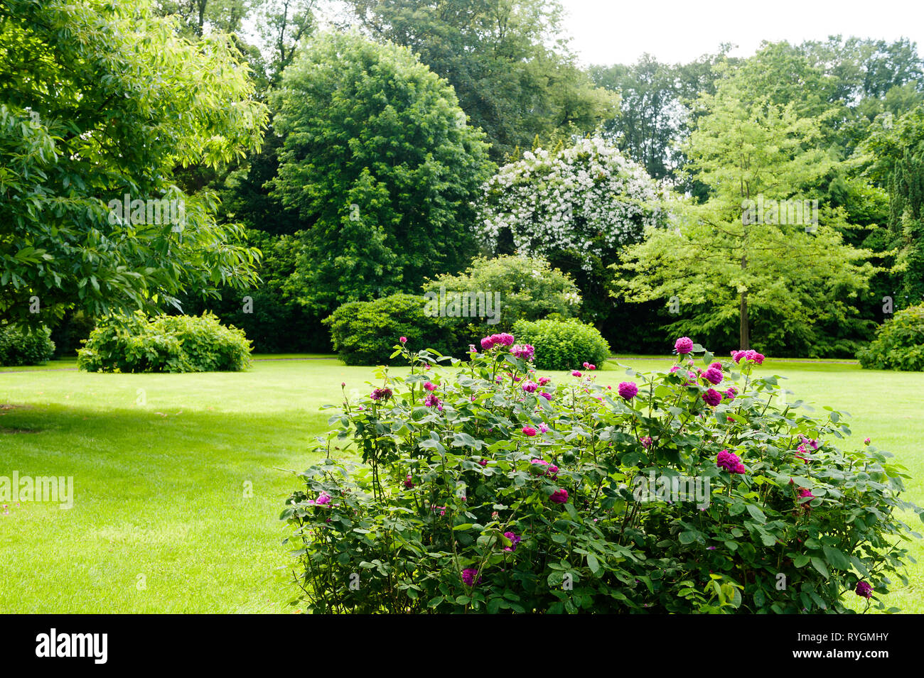 Flowers on lawn by trees Stock Photo