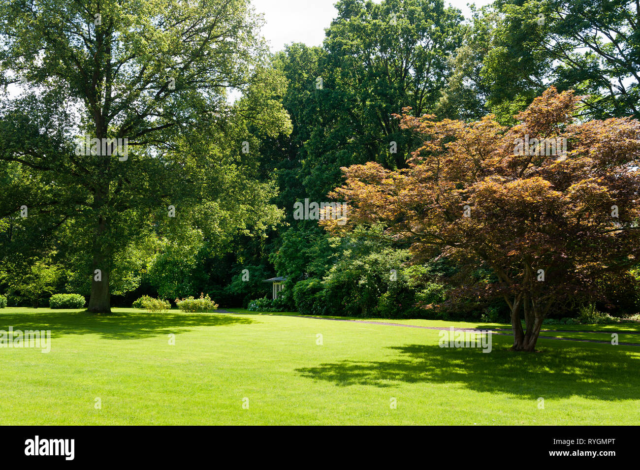 Trees by lawn - Stock Image