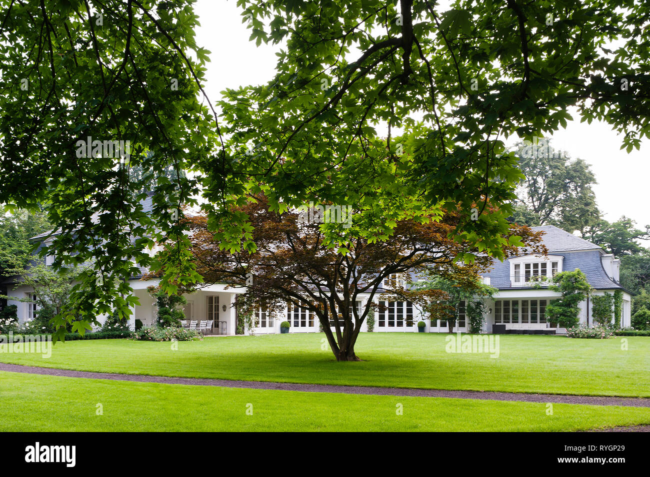 Tree on lawn by house - Stock Image