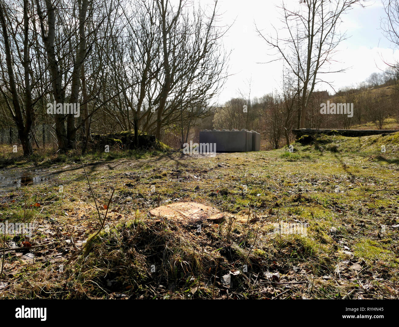 Stoney Wood, Wirksworth, Derbyshire, UK. 14th March, 2019. Trees cut down by Derbyshire Dales District Council to make way for a Gypsy Roma Traveller camp, threatening adjacent local wildlife scanctury, Stoney Wood, Wirksworth. Concrete blocks placed on the carpark to protect Wirksworth beauty spot owned by Wirksworth Town Council (Labour) after Derbyshire Dales District Council (Conservative) voted on relocating a GRT Travellers camp on disputed land adjacent to Stoney Wood, Wirksworth, Derbyshire Dales. Credit: Doug Blane/Alamy Live News - Stock Image