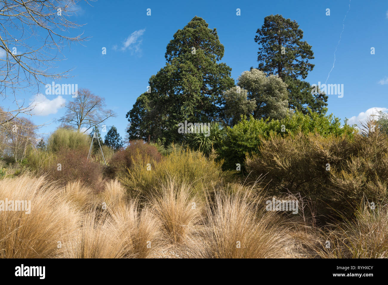 View of the New Zealand garden area in Savill Garden on the Surrey/Berkshire border, UK, during March - Stock Image