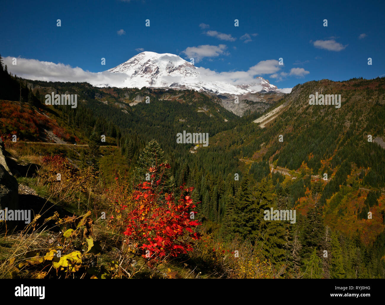 WA15945-00...WASHINGTON - Fall color in Stevens Canyon from Stevens Canyon Bend pullout and Mount Rainier in Mount Rainier National Park. - Stock Image