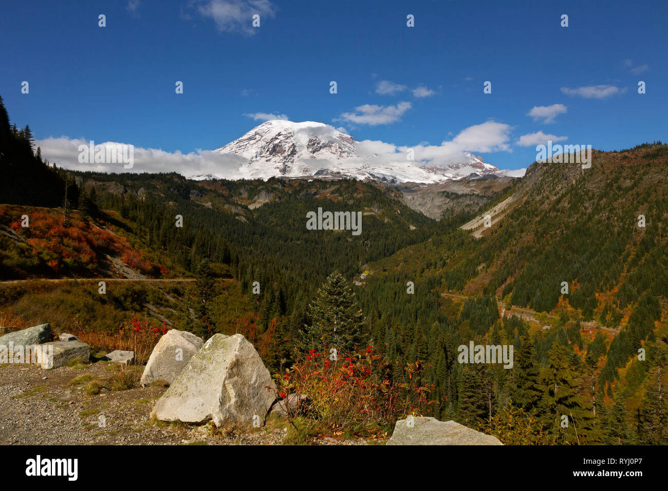WA15946-00...WASHINGTON - Fall color in Stevens Canyon from Stevens Canyon Bend pullout and Mount Rainier in Mount Rainier National Park. - Stock Image