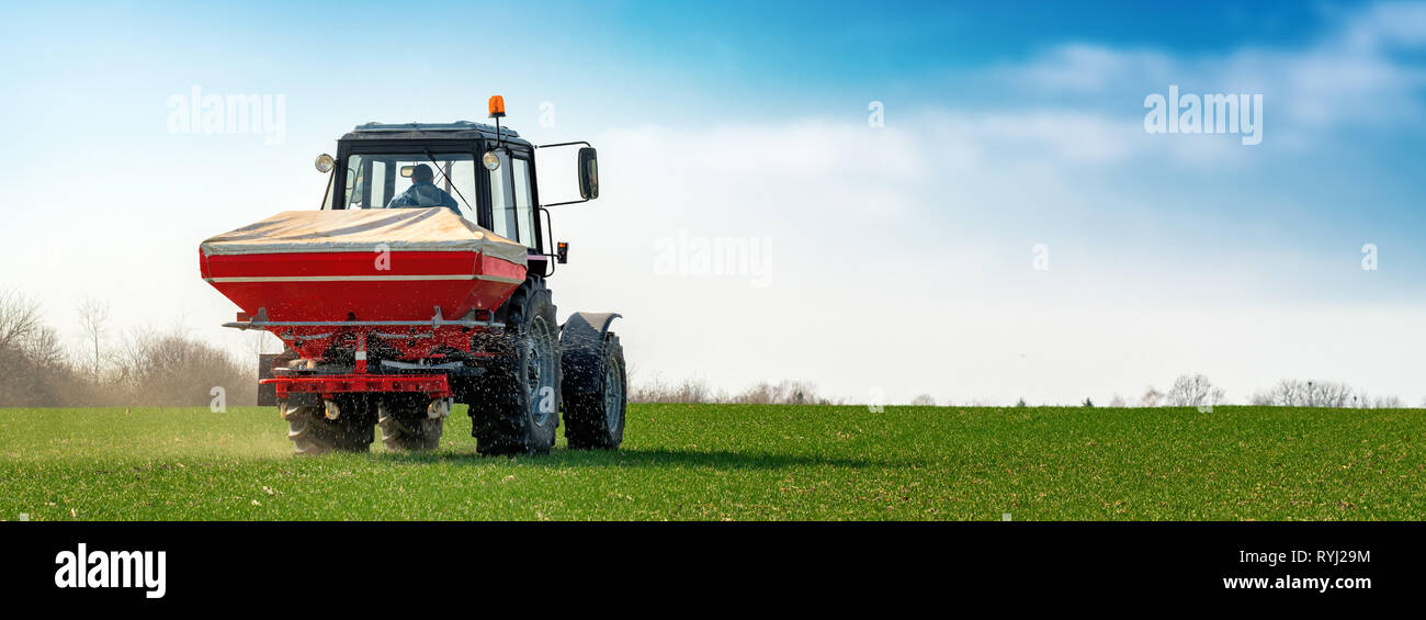 Unrecognizable farmer in agricultural tractor is fertilizing wheat crop field with NPK fertilizer nutrients Stock Photo