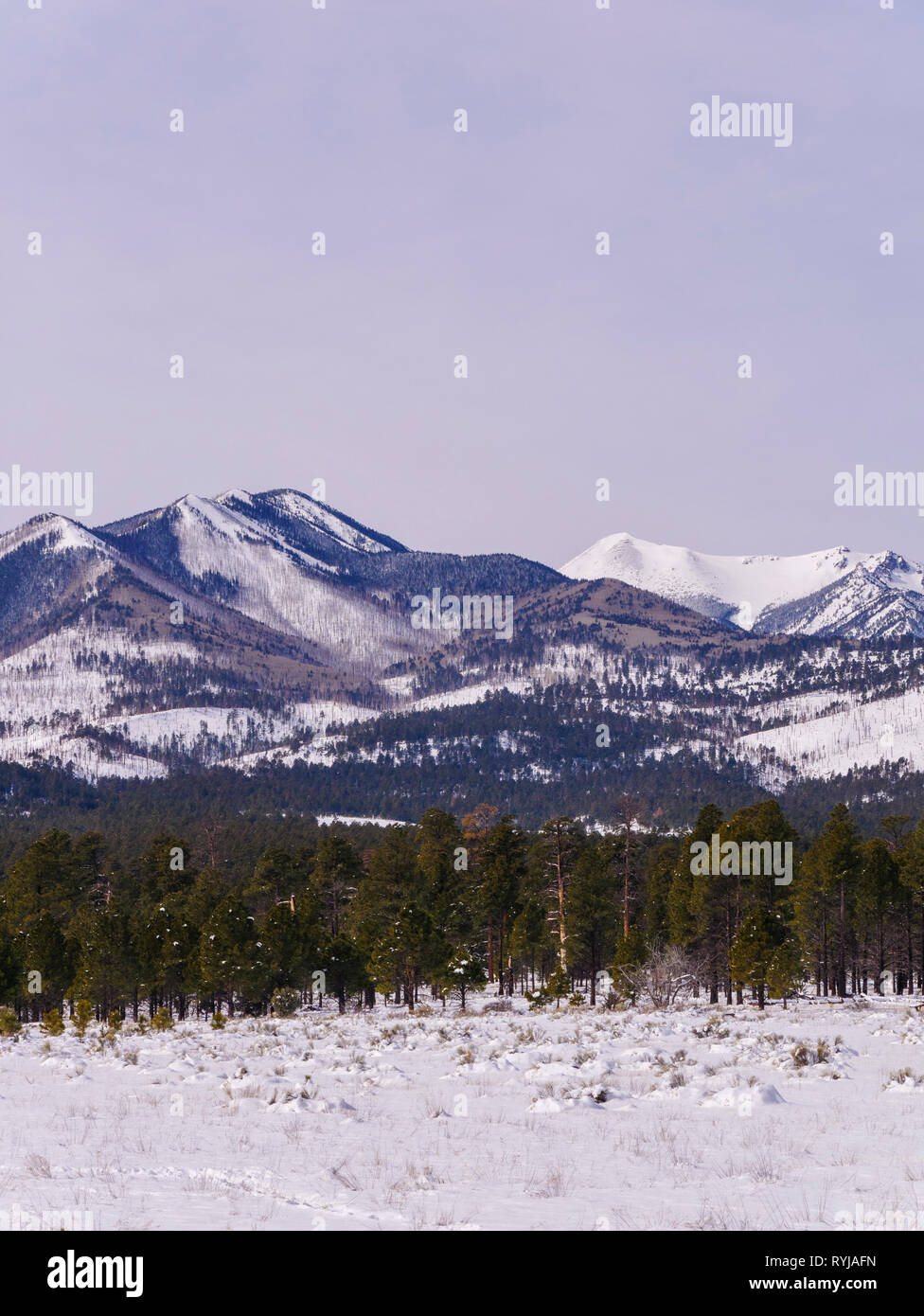 The San Francisco Peaks, which are the remnants of a collapsed stratovolcano, as viewed from Sunset Crater National Monument, Arizona. - Stock Image