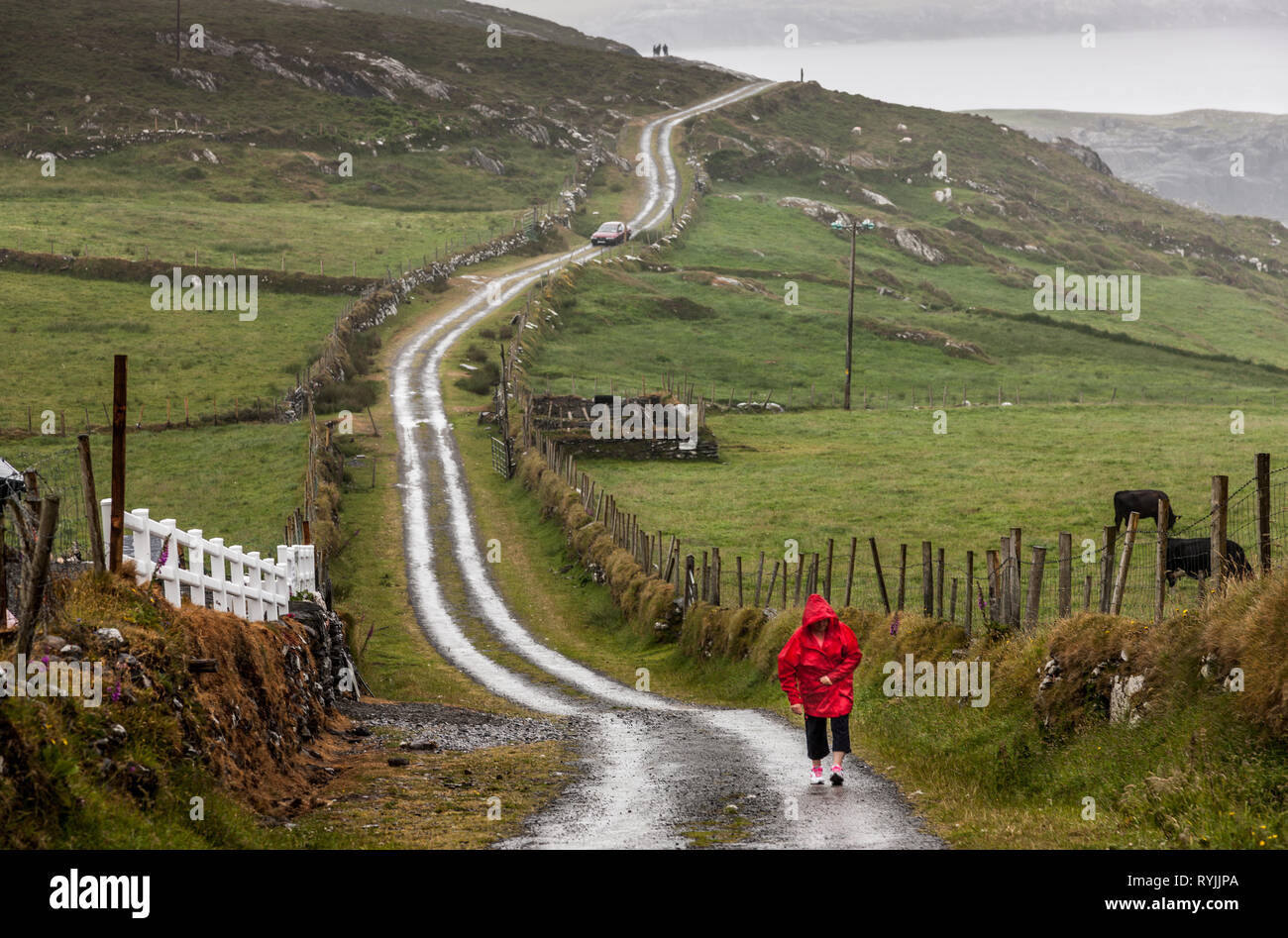 Dursey Island, Cork, Ireland. 18th June, 2016  A woman walks on the main road on a wet day in the townland of Kilmichael on Dursey Island, Co. Cork, I - Stock Image