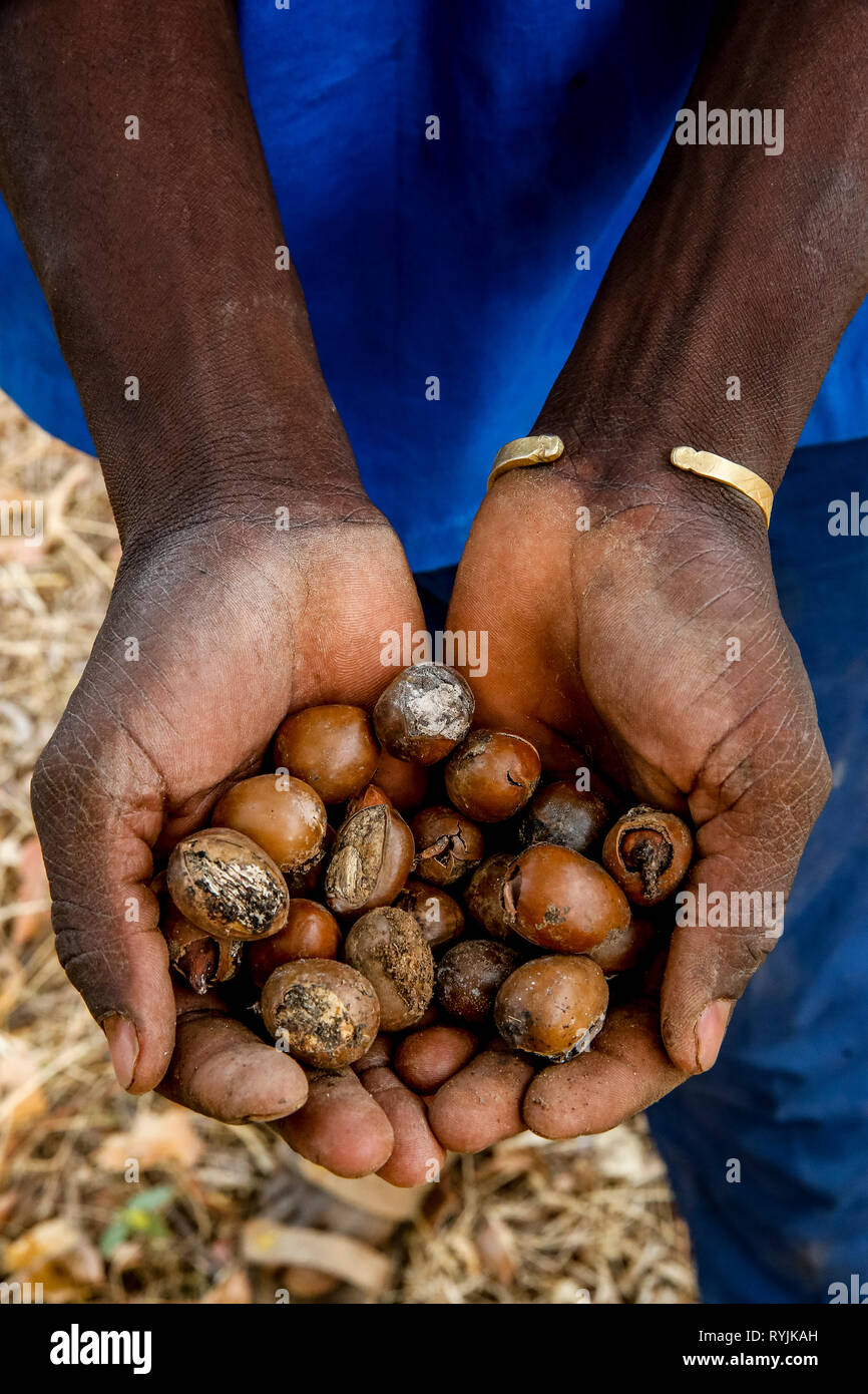 Man holding shea nuts in Ouahigouya, Burkina Faso. Stock Photo