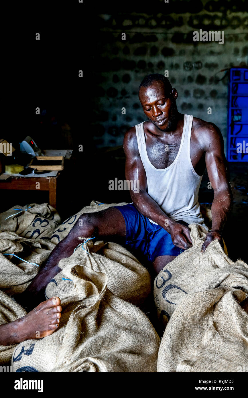 Cocoa bean packing in Agboville, Ivory Coast. - Stock Image