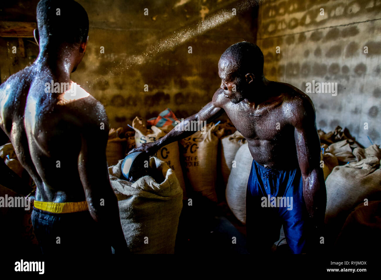 Cocoa workers weighing a bag in Agboville, Ivory Coast. Stock Photo