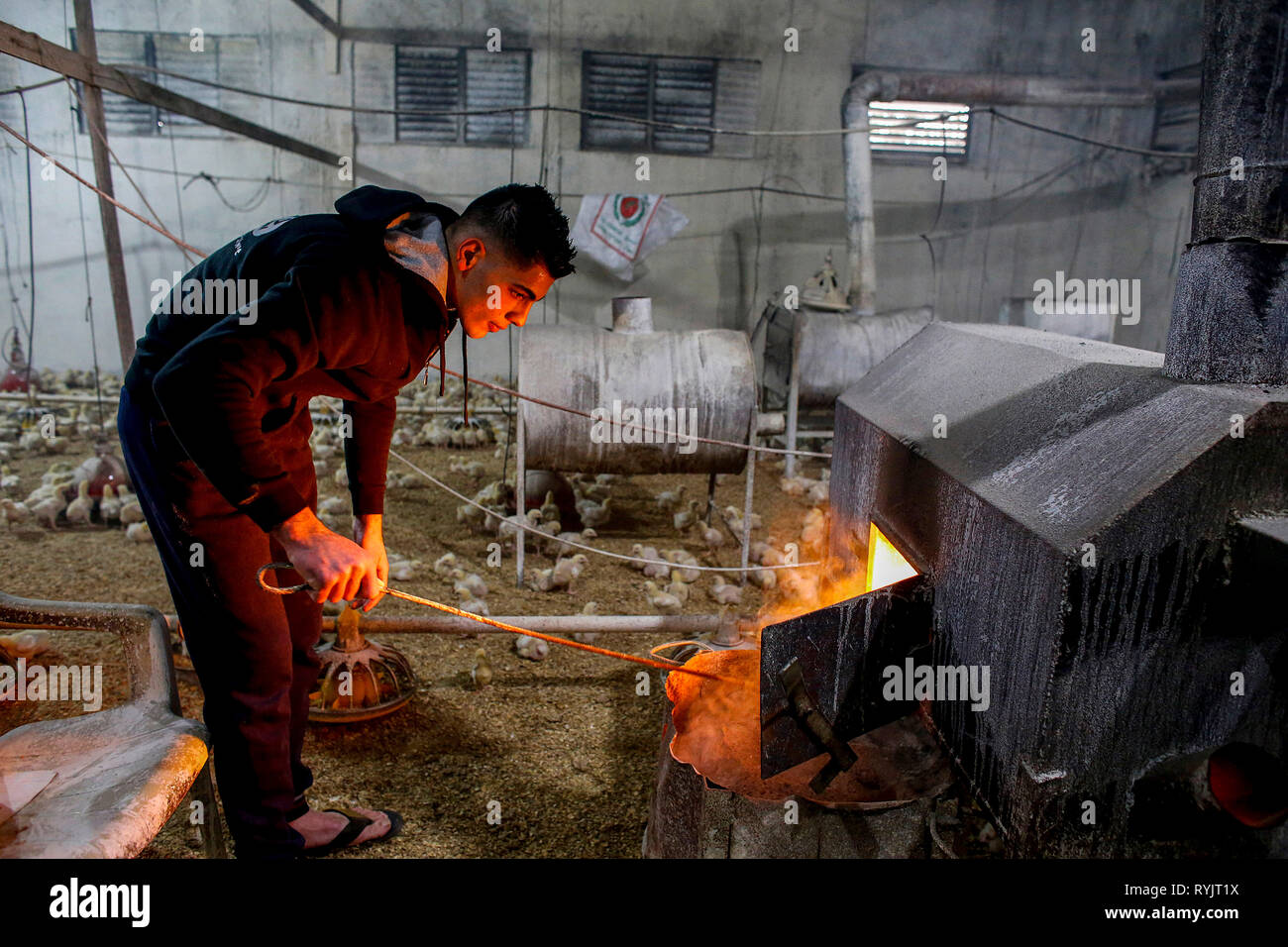 Qais Mahmoud Adel Mahmoud's heated poultry farm in Beit Imrine, West Bank, Palestine, financed by a loan from ACAD Finance. - Stock Image