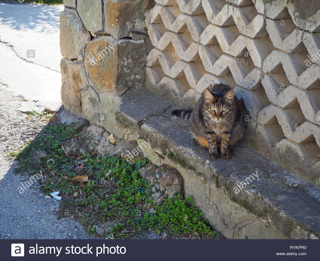 Dark grey and black colored stray cat - Stock Image