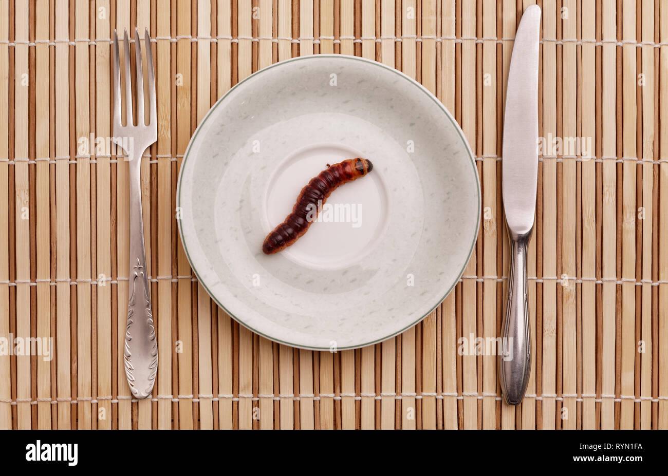 Goat Moth (Cossus cossus) caterpillar on plate, food concept - Stock Image