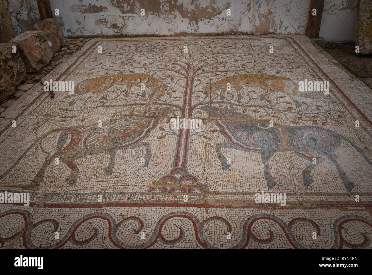 Roman Mosaic in Madaba archeological museum, Gazelle and oxes, Jordan, Middle East Stock Photo