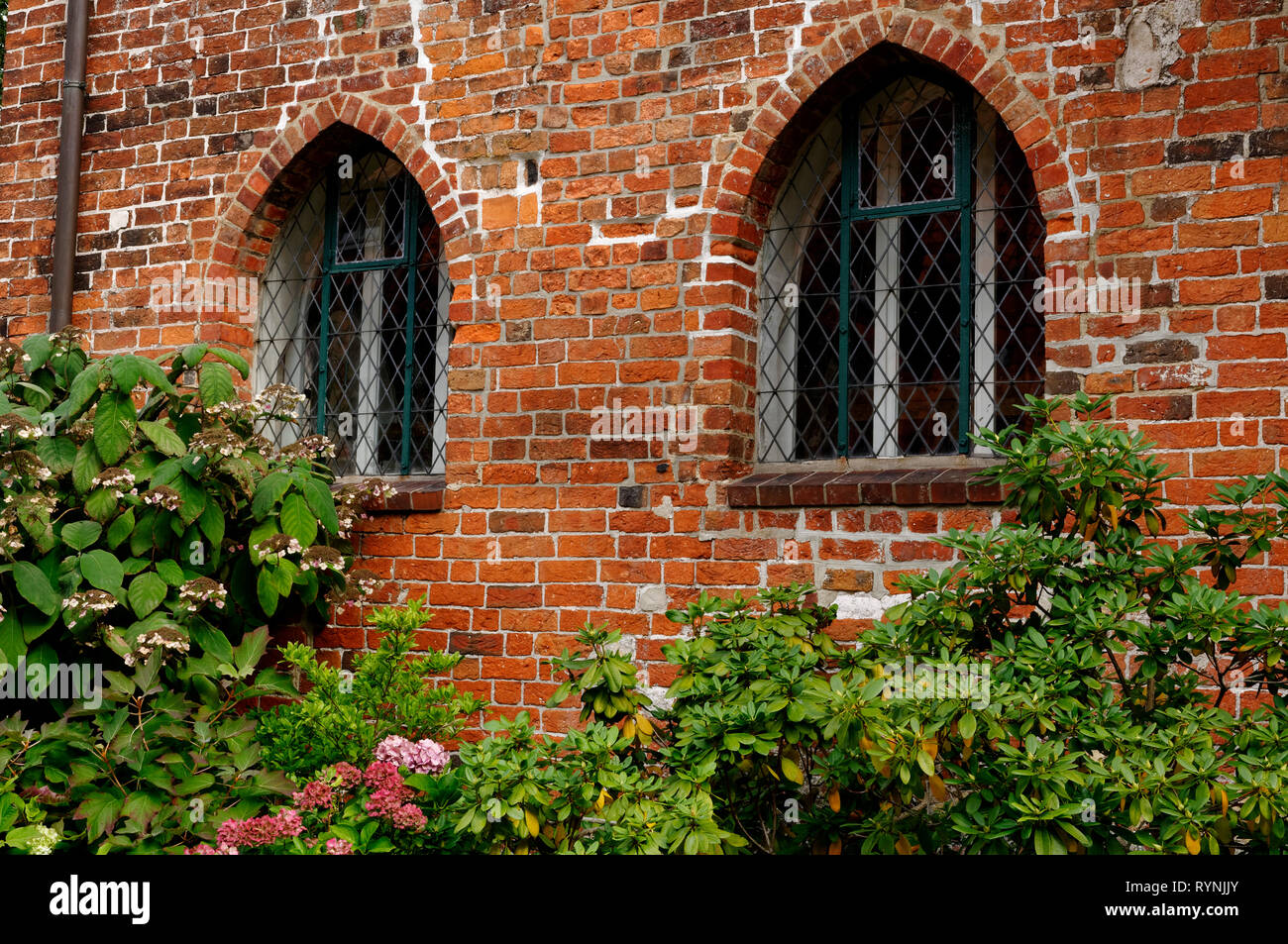 Lüne Abbey in Lüneburg: 2 windows (brick gothic), Lower Saxony, Germany - Stock Image