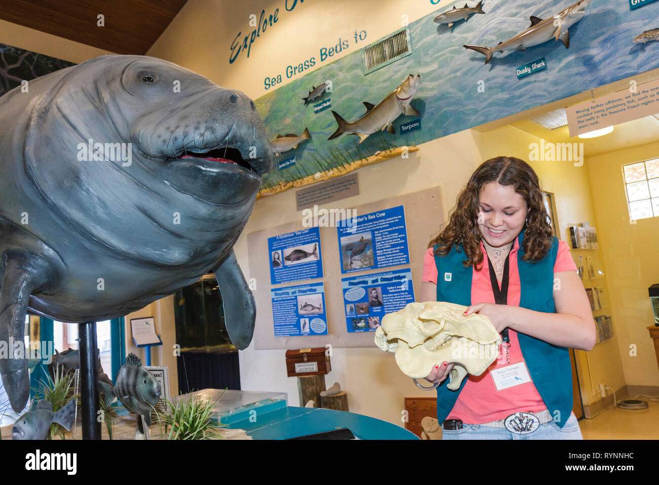 Florida Fort Ft. Pierce Manatee Observation and Education Center wildlife observation sea cow endangered specie girl teen studen - Stock Image