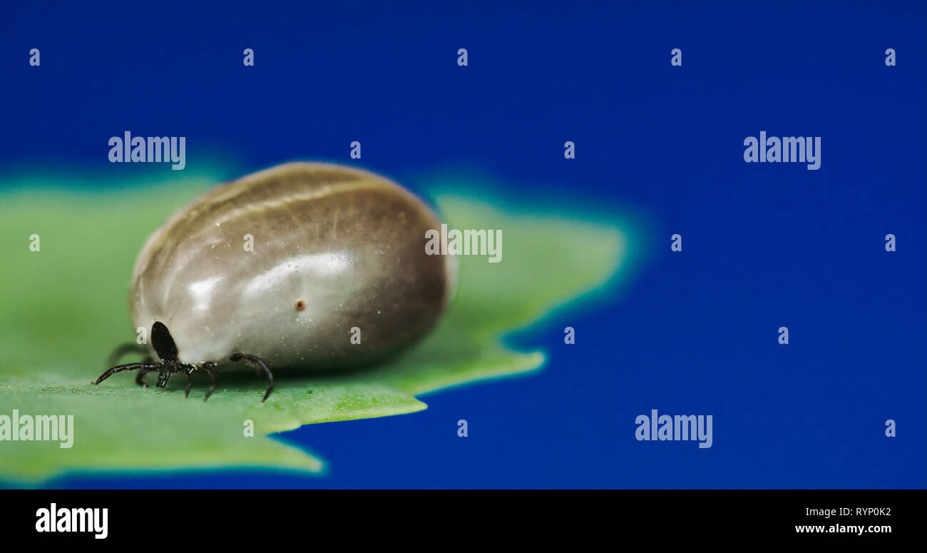 Spider Mite Stock Photos & Spider Mite Stock Images - Page 2 - Alamy