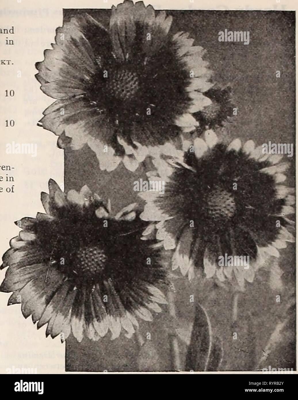 Dreer's midsummer list 1929 (1929) Dreer's midsummer list
