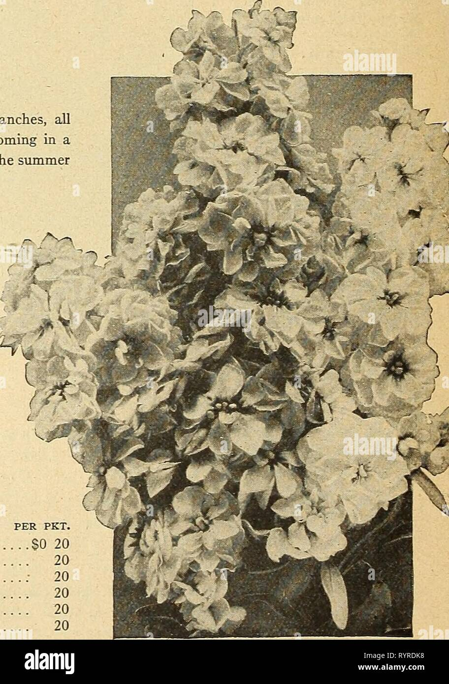 Dreer's midsummer list 1926 (1926) Dreer's midsummer list 1926 . dreersmidsummerl1926henr Year: 1926  Schizanthus â _ (Butterfly or Fringe Flower) This is one of the airiest and daintiest flowers imaginable, especially adapted to bordering beds of taller flowers and those of a heavier growth. The seeds germinate quickly and come into bloom in a few weeks from sowing. The florescence is such as to completely obscure the foliage, making the plant a veritable pyramid of the most delicate and charming bloom. The Schizanthus make admirable pot plants for the house in late winter and early spring. F - Stock Image