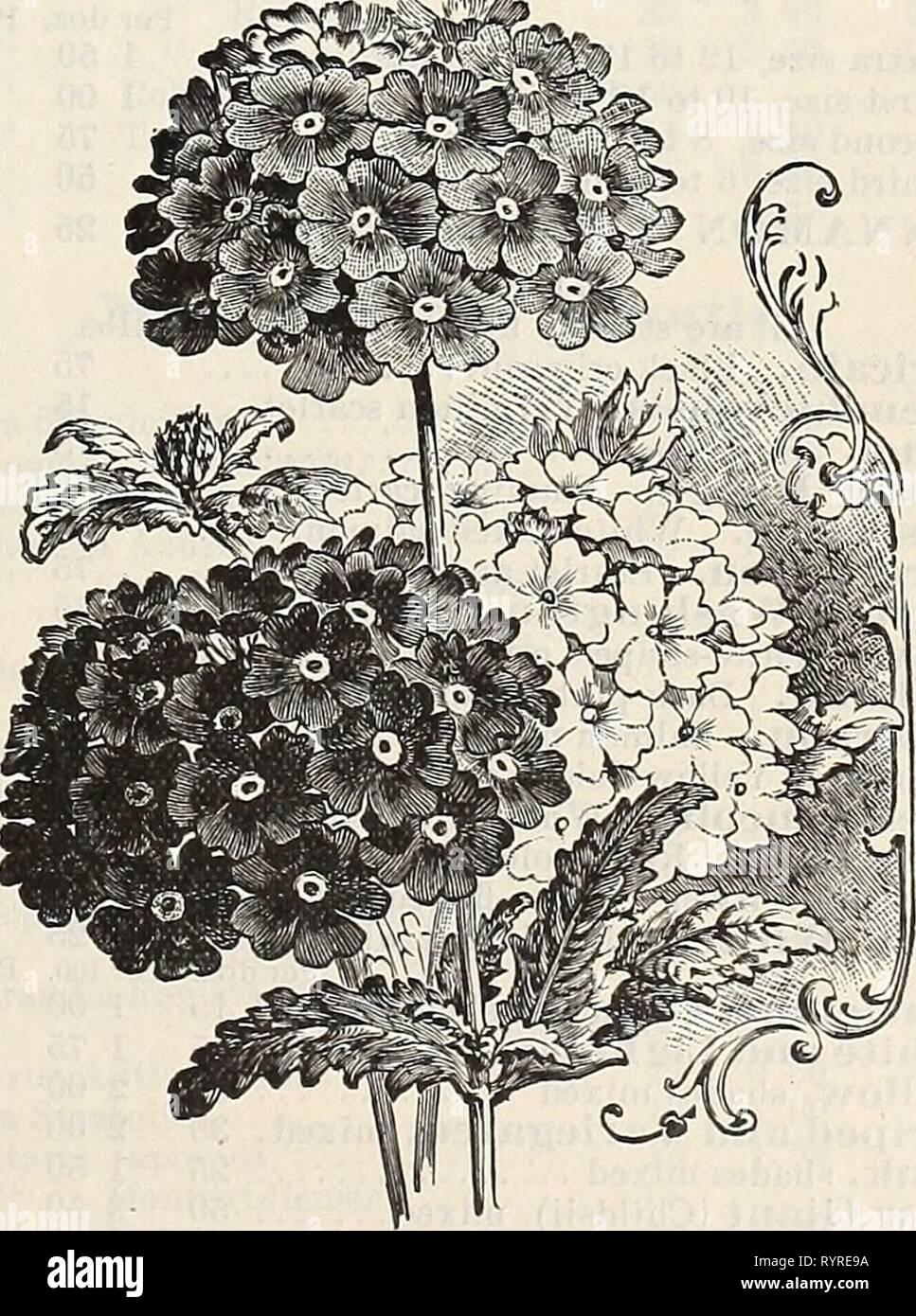 Dreer's quarterly wholesale price list Dreer's quarterly wholesale price list of vegetable seeds flower seeds bulbs aquatics decorative plants hard plants tools implements etc., etc . dreersquarterlyw1900henr_0 Year: 1900  ViNCA Rosea Alba. WaXeriana., rm^tdi {Garden Heliotrope) . . . Verbena, Dreer's Mammoth, white . . . ' ' scarlet . . . ' ' pink .... ' ' purple . . . ' ' striped . . . ' ' mixed . . . hybrida extra choice mixed Lemon, [Aloysia citriodora) Venosa, purplish heliotrope, fine bedding plant Erinoides, deep lilac, excellent for baskets, vases, etc Vlnca, rosea, rose with dark eye  - Stock Image