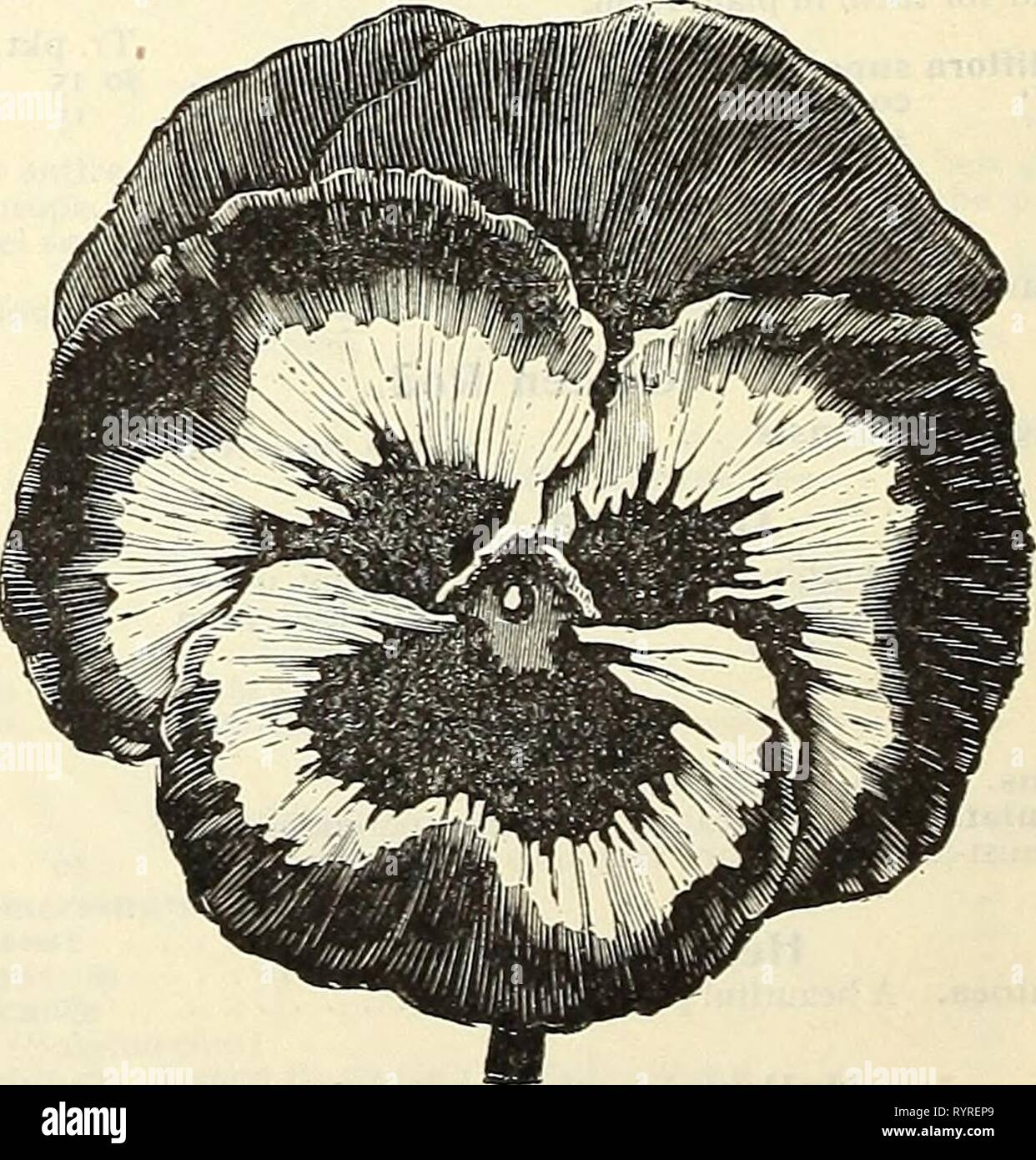 Dreer's wholesale price list  Dreer's wholesale price list : summer edition 1903 July to August plants bulbs seasonable flower and vegetable seeds, fertilizers, tools, etc., etc . dreerswholesalep1903henr_1 Year: 1903  KUGNOT S SUPERB BLOTCHED PANSY. Phlox Decussata. The hard' perennial Phlox, saved from our own splendid collec- tion. Finest mixed. 25 cts. per tr. pkt.; S'-oo per oz. Physalis. Tr.pkt. Oz. Francheti (Chinese Lantern Plant) So 15 So 50 Platycodon (Chinese Bellflower or Balloon Flower.) Tr. pkt. Oz. Japonicus, fl. pi. Double blue • . . . . So 10 So 25 Mariesi. Dwarf blue 10 30 G - Stock Image