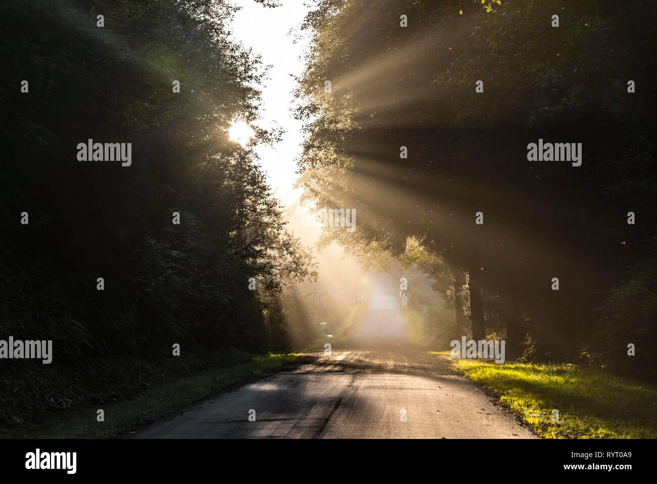 Sunlight shines through trees on a road, Oregon Coast Highway, Oregon, USA - Stock Image