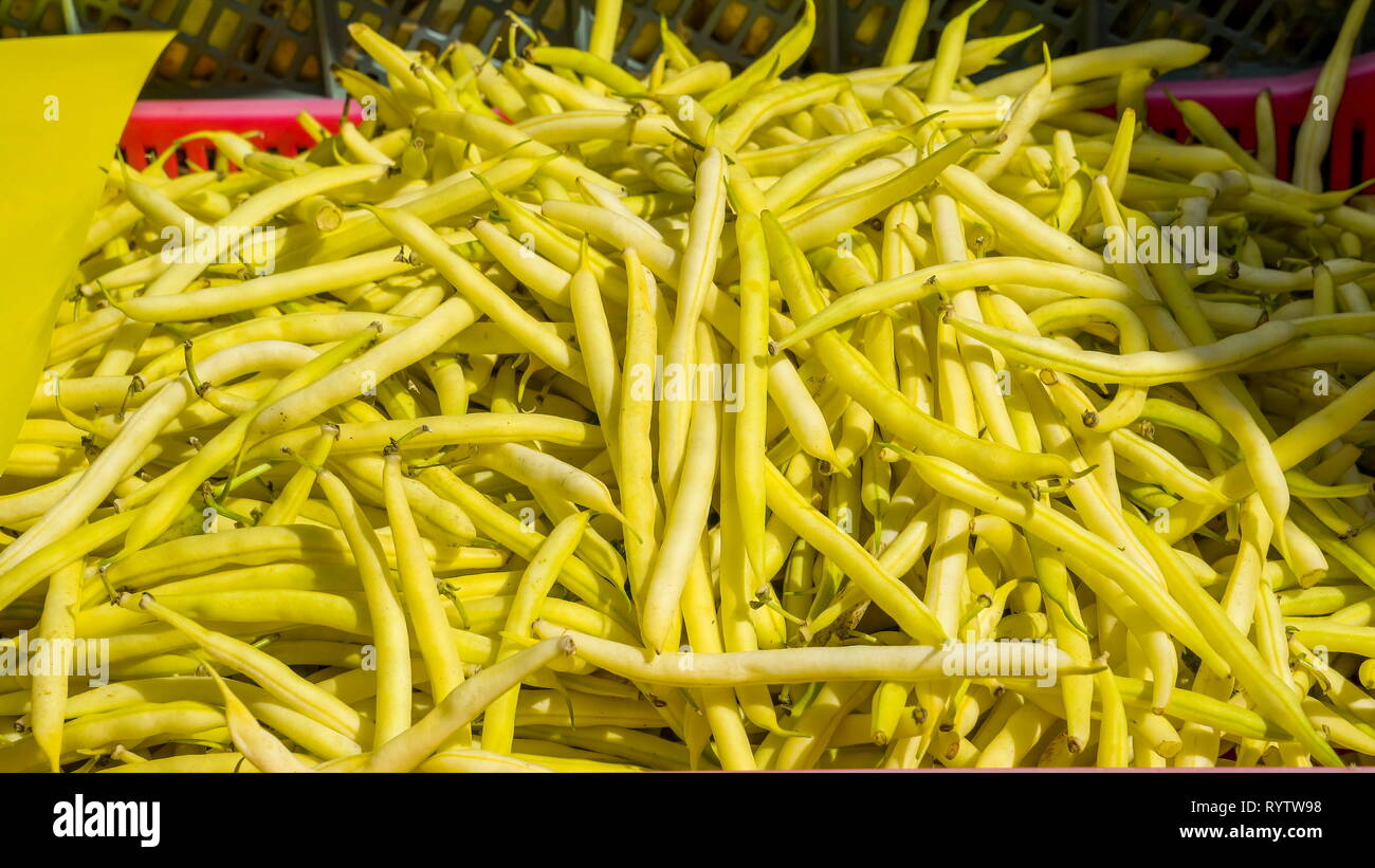 Yellow green colored Phaseolus vulgaris on the basket. Phaseolus vulgaris the common bean is a herbaceous annual plant grown worldwide for its edible  - Stock Image